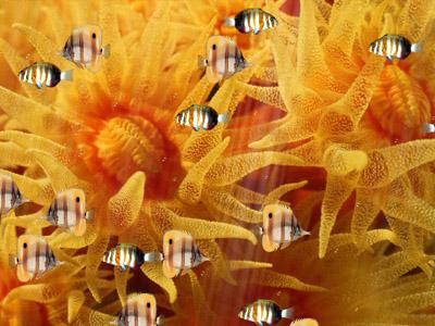 Полосатые рыбки в Аквариуме выглядят классно