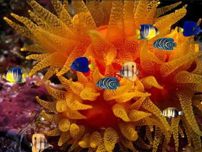 Живой Аквариум в ярких цветах