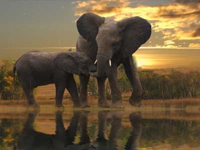 Слоны в обоях среди деревьев