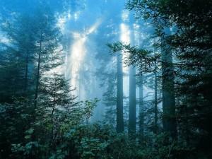 Заставка сказочный лес в картинке
