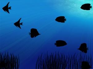 Ночные Живые Обои с аквариумом с отличным видом