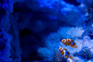 ten-akvariuma