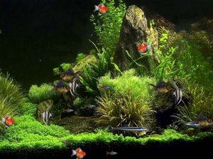 Живые обои с рыбками в Виртуальном Аквариуме