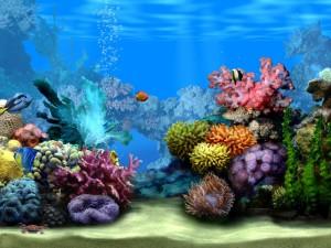 akvarium3