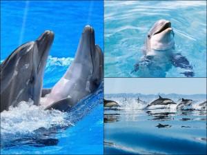 Дельфины в Живых обоях