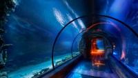 Туннель на морском дне в невероятном исполнении