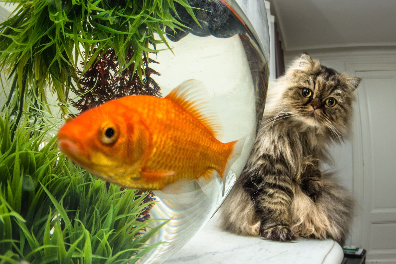 Приколы с рыбами картинки